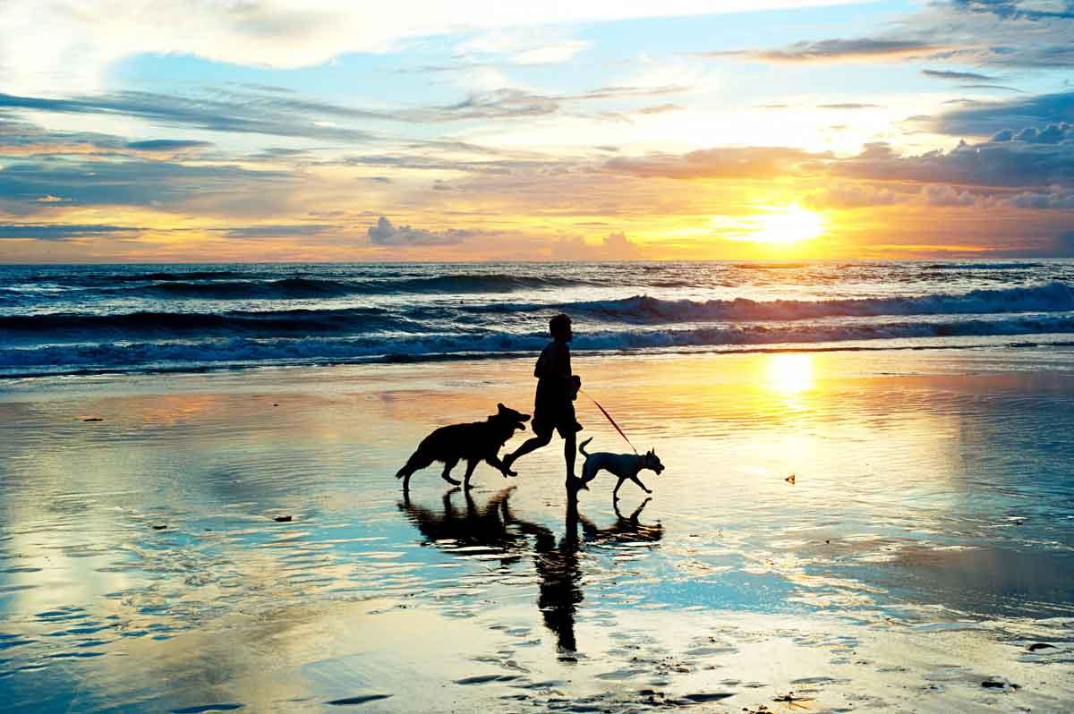 hotel aan zee met hond